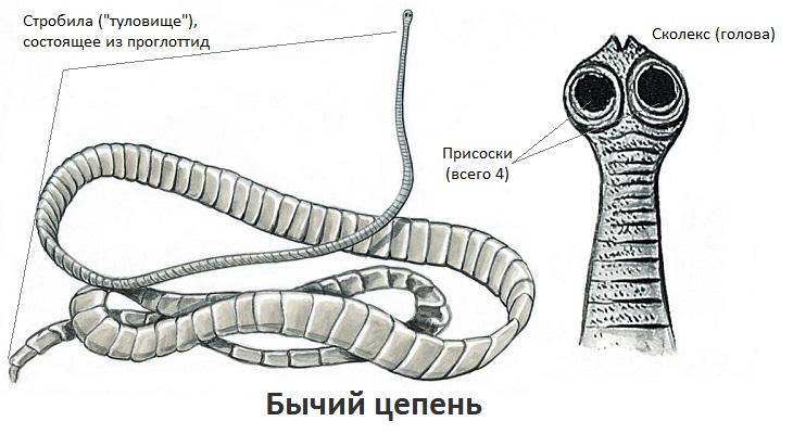 профилактика от паразитов в домашних условиях