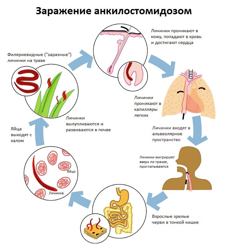 подкожные паразиты у человека симптомы лечение