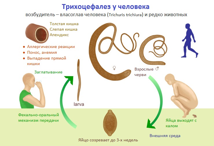 виды паразитов у человека и способы заражения