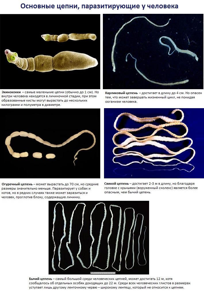 средства от глистов и паразитов для человека