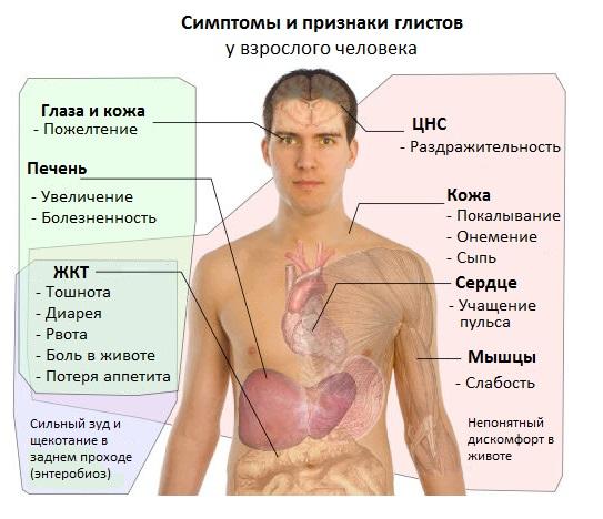 Признаки глистов у человека в суставах врач по суставам и связкам
