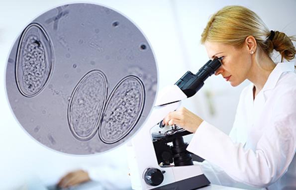 Анализ на энтеробиоз – как сдавать?