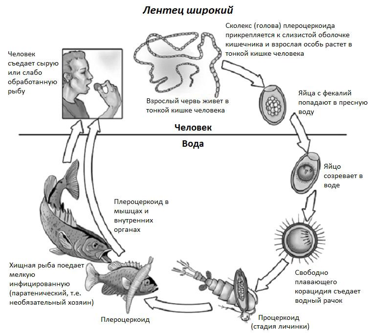 паразиты в организме симптомы фото