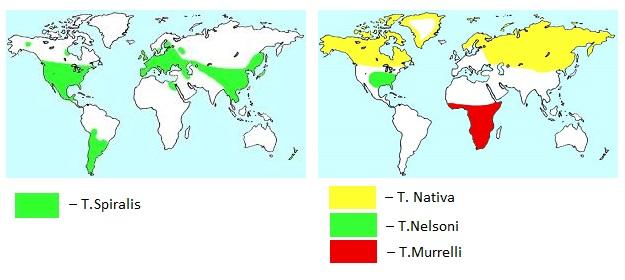 Распространение возбудителей трихинеллеза на карте