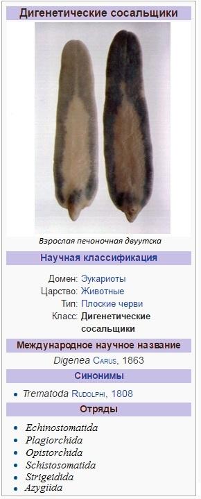 Класс трематоды – таксономия