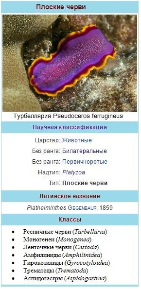 Плоские черви – классификация