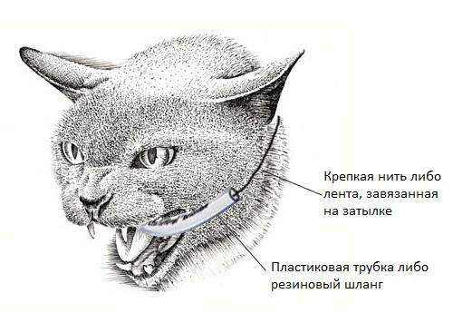 Приспособление, чтобы кошка не укусила за палец