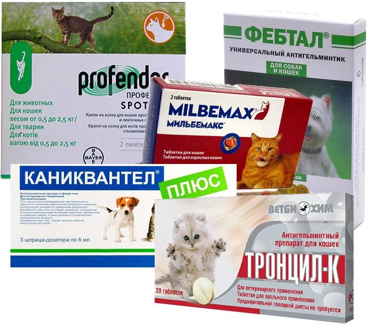 Препараты от глистов для беременных кошек и котят
