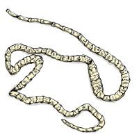 Ленточные черви (цестоды)