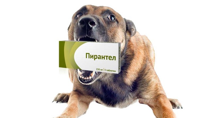средство от глистов для собак milbemax