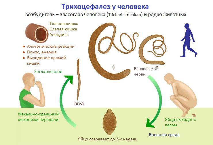виды паразитов в организме человека симптомы