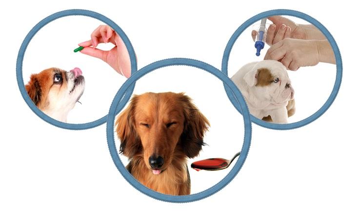 Дегельминтизация взрослых собак и щенков