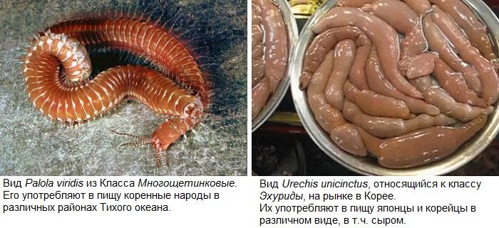 Представители кольчатых червей, которых едят люди